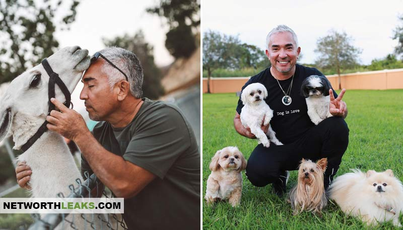 Cesar Millan's horse and dogs